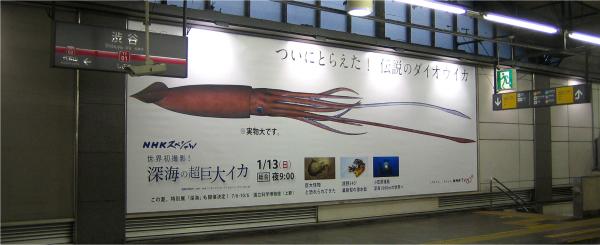 横幅9.2メートルの大型ポスターを全面的に使用し、ダイオウイカの大きさを表現している(東急東横渋谷駅)。